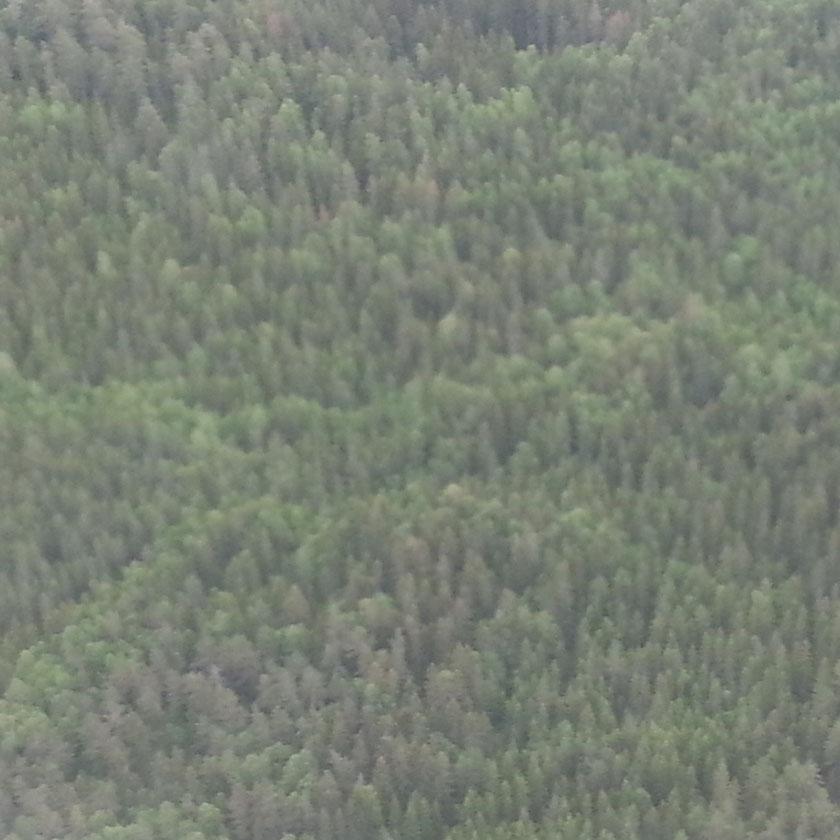 Skogbilde tatt fra fly