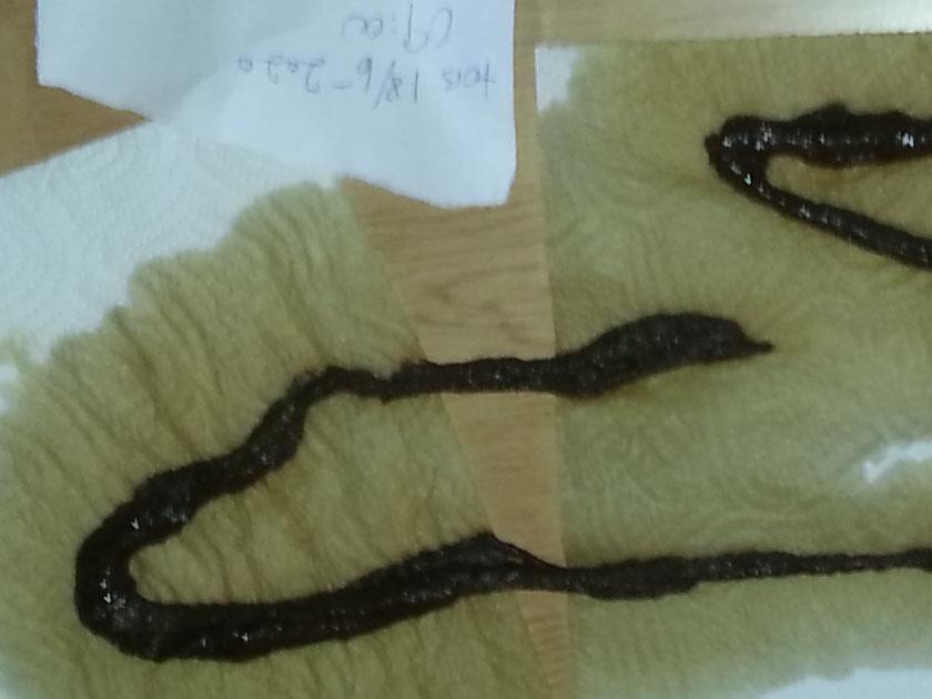 parasittrens-20200618_091735-kaffeenema01-oversiktsbilde02