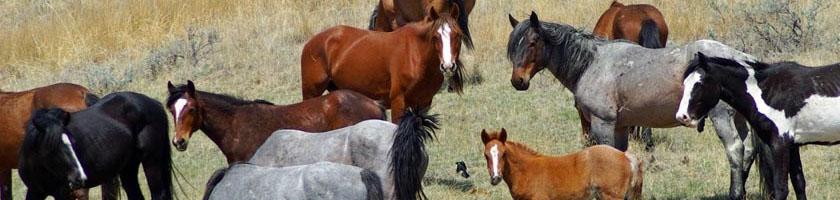 Ivermectin veterinærmedisin for parasitter og corona