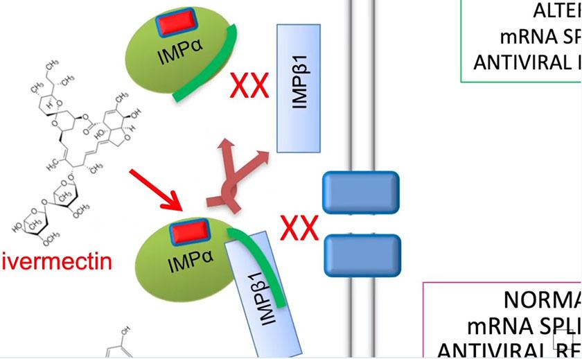 Ivermectin virkningsmekanisme for Covid-2 viruset.