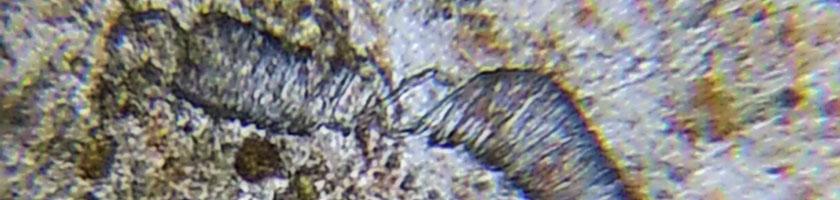 Mikroskopi dobbelparasitt 2020-08-28