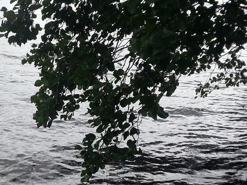 vannkopper-20200915-blader-maridalsvannet-20200822_134933