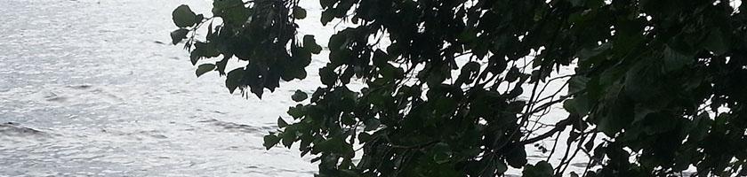 vannkopper-20200915-blader-maridalsvannet-banner-20200822_134933