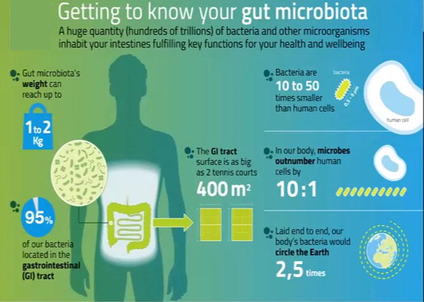 immunsystemet-101-01-microbiome-microbiota