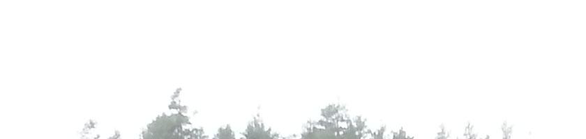 straaling-01-tretopper-hvitt-banner-20201113_111424