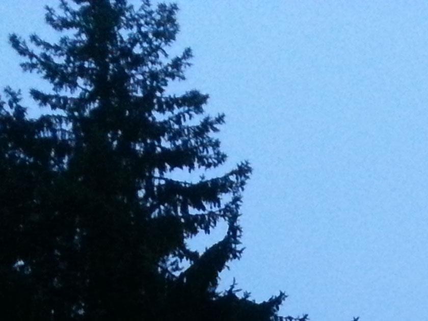straaling-02-traer-himmel-sort-blaatt-20201205_153132