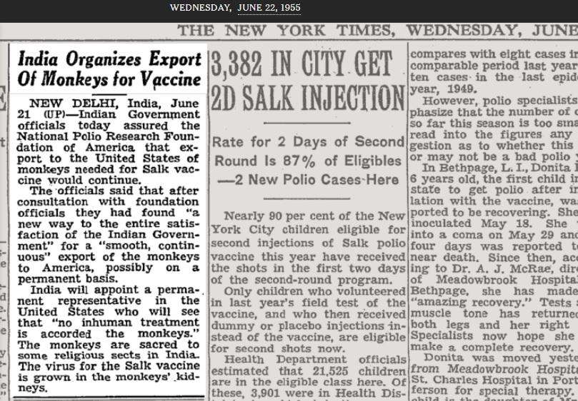 India eksporterer aper til bruk i vaksineproduksjon.