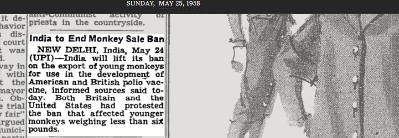 Unge aper til vaksineproduksjon.