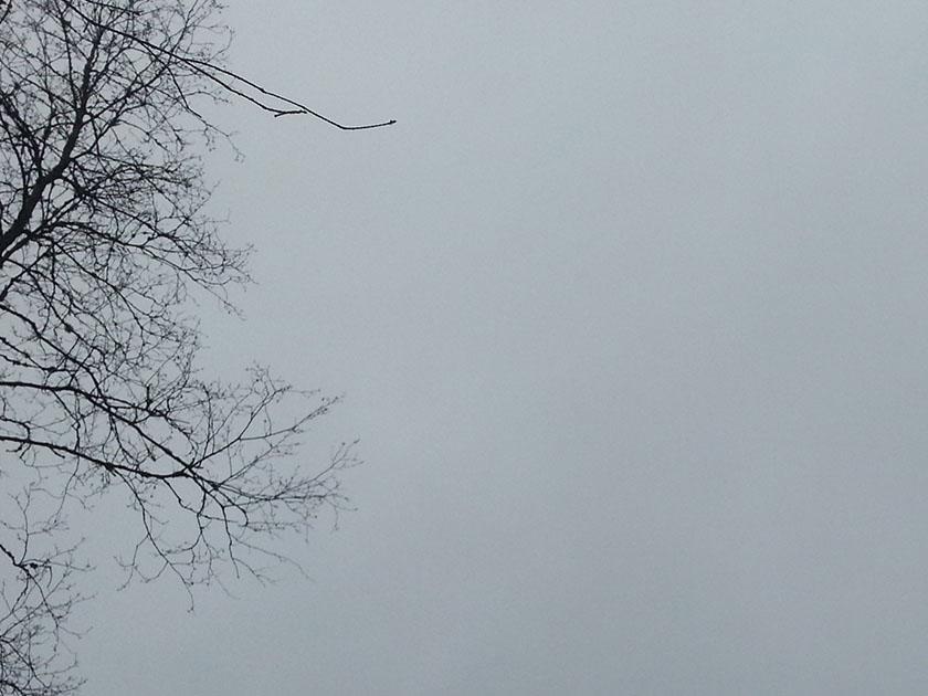 me-symptomer-02-overskyet-grener-20210329_111813