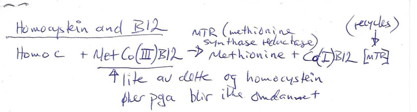 Paradoksal høy serum B12, homocystein i metyleringssyklus