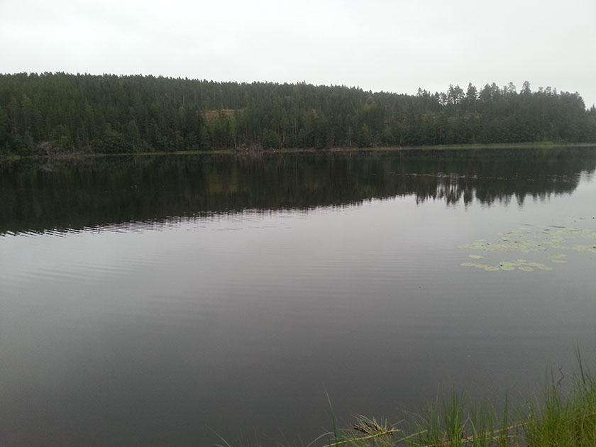 neseskyll-innsjo-03-svensjoen-20210812_060238